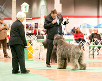 Dogshow 2017-12-09 Skokie Valley KC--165435