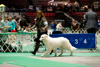 Dogshow 2017-04-08 KC of Yorkville--132821-2