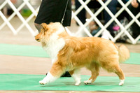 Dogshow 2017-12-09 Skokie Valley KC--153212-3