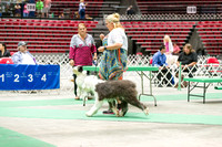 Dogshow 2017-07-08 Greater DeKalb KC--141052