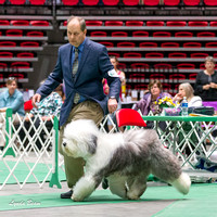Dogshow 2017-04-08 KC of Yorkville--165632-3