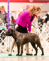 Dogshow 2017-12-09 Skokie Valley KC--090532