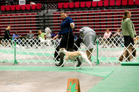 Dogshow 2017-04-08 KC of Yorkville--145158-5