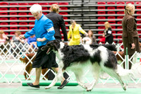 Dogshow 2017-04-08 KC of Yorkville--145503