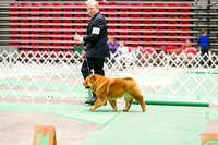Dogshow 2017-04-08 KC of Yorkville--162411