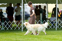 Dogshow 2017-06-04 untitled shoot--104541