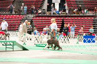 Dogshow 2017-07-08 Greater DeKalb KC--140936-3