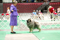 Dogshow 2017-07-08 Greater DeKalb KC--142343