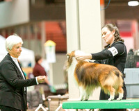 Dogshow 2017-12-09 Skokie Valley KC--153613