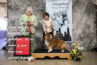 Dogshow 2018-03-04 CSSC Day 2--141451