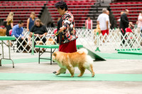 Dogshow 2017-07-08 Greater DeKalb KC--135837