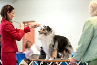 Dogshow 2018-03-04 CSSC Day 2 Candids--134753