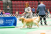 Dogshow 2017-04-08 KC of Yorkville--153805-2