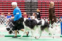 Dogshow 2017-04-08 KC of Yorkville--145526