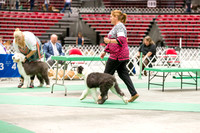 Dogshow 2017-07-08 Greater DeKalb KC--141214-2