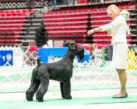 Dogshow 2017-07-08 Greater DeKalb KC--161001