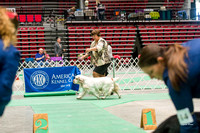 Dogshow 2017-04-08 KC of Yorkville--153515