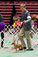Dogshow 2017-04-08 KC of Yorkville--152702-3