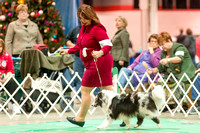 Dogshow 2017-12-09 Skokie Valley KC--152924-2