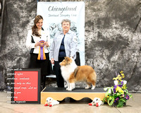 Dogshow 2017-03-05 Sheltie Win Photos--125955