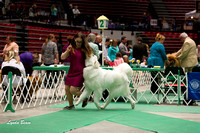 Dogshow 2017-04-08 KC of Yorkville--132927