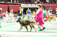 Dogshow 2017-07-08 Greater DeKalb KC--101620