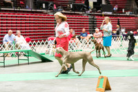 Dogshow 2017-07-08 Greater DeKalb KC--152443-3