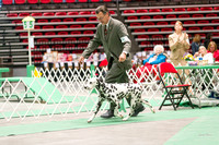 Dogshow 2017-04-08 KC of Yorkville--162324