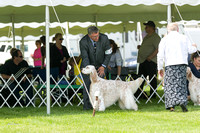 Dogshow 2017-06-04 untitled shoot--101804