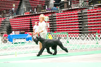 Dogshow 2017-07-08 Greater DeKalb KC--160832-3