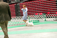 Dogshow 2017-07-08 Greater DeKalb KC--160849