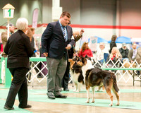Dogshow 2017-12-09 Skokie Valley KC--165250