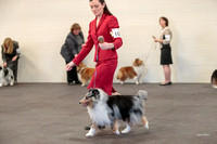 Dogshow 2018-03-04 CSSC Day 2 Candids--134846-2