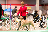 Dogshow 2017-12-09 Skokie Valley KC--090024-2