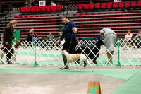 Dogshow 2017-04-08 KC of Yorkville--145159