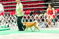 Dogshow 2017-07-08 Greater DeKalb KC--142311-3