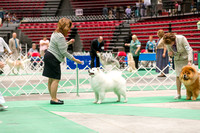 Dogshow 2017-07-08 Greater DeKalb KC--142409