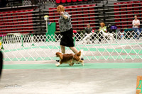 Dogshow 2017-04-08 KC of Yorkville--151639-5
