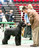 Dogshow 2017-04-08 KC of Yorkville--160542
