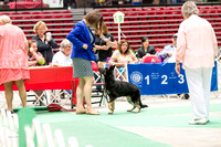 Dogshow 2017-07-08 Greater DeKalb KC--140550