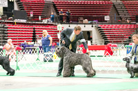 Dogshow 2017-07-08 Greater DeKalb KC--160900