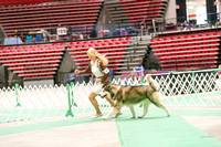 Dogshow 2017-04-08 KC of Yorkville--173924-2