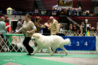 Dogshow 2017-04-08 KC of Yorkville--132521-3