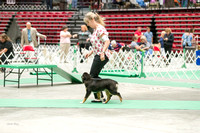 Dogshow 2017-07-08 Greater DeKalb KC--140855