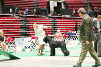 Dogshow 2017-07-08 Greater DeKalb KC--160858