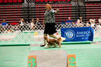Dogshow 2017-04-08 KC of Yorkville--151509-2