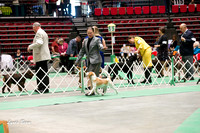 Dogshow 2017-04-08 KC of Yorkville--145205