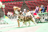 Dogshow 2017-04-08 KC of Yorkville--173919-2