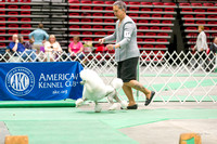 Dogshow 2017-04-08 KC of Yorkville--162350-2