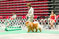 Dogshow 2017-07-08 Greater DeKalb KC--142259